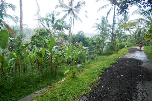 Tanah di Ubud dijual 105 Are View Gunung dan sungai di Ubud Tegalalang