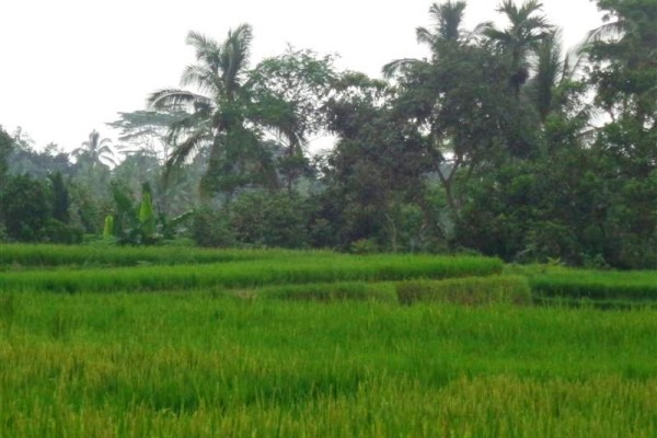 Jual tanah di Ubud 9 Are Pinggir jalan di Ubud Tegalalang
