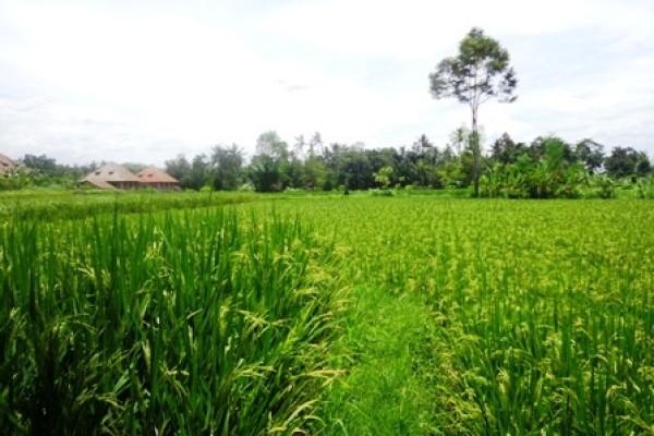 Tanah di Ubud Bali dijual 16 Are di Ubud Pejeng