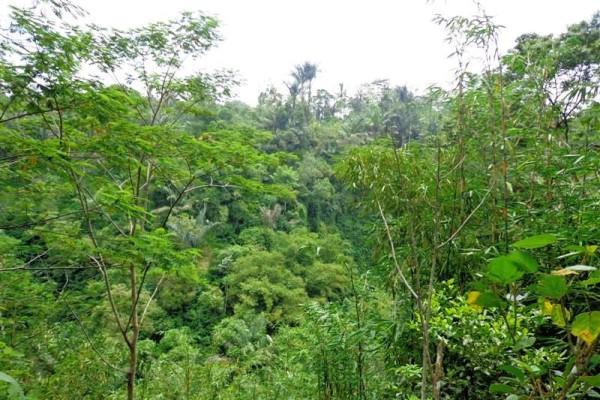 Tanah di Ubud dijual 5,000 m2 Tepi Sungai  di Ubud Tegalalang
