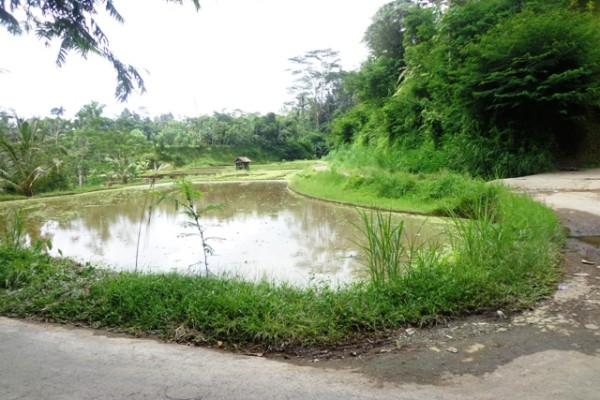 Tanah dijual di Ubud Bali 17 Are di Ubud Tegalalang