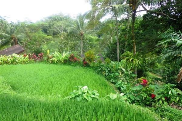 Jual tanah di Ubud 31 Are View sawah dan Gunung di Ubud Tegalalang
