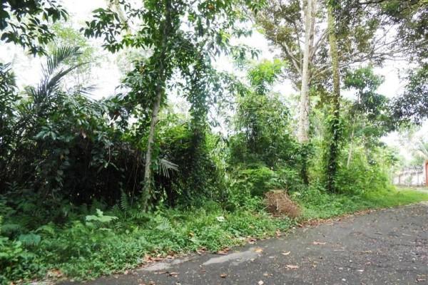 Tanah dijual di Ubud 125 Are View sungai dan Tebing  di Ubud Tegalalang Bali