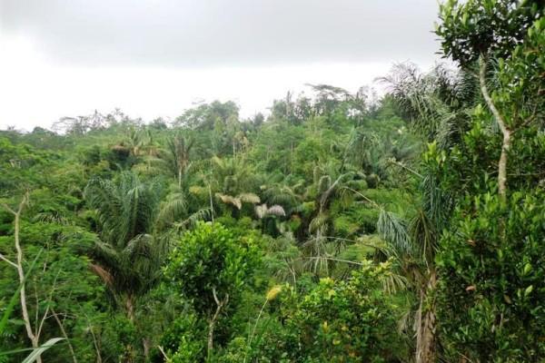 Tanah dijual di Ubud 5.000 m2 View tebing dan sungai  di Ubud Tegalalang