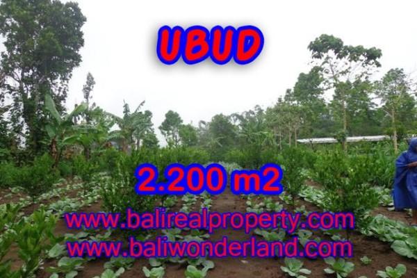Jual tanah di Ubud Bali 22 Are di Ubud Tegalalang