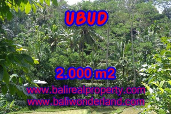 Tanah di Ubud dijual 2.000 m2 di Ubud Tegalalang