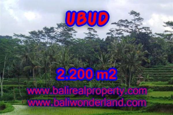Tanah di Bali dijual murah 2.200 m2 di Ubud Payangan