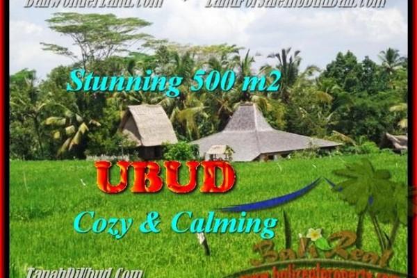 TANAH di UBUD BALI DIJUAL 500 m2  View  Sawah link Villa