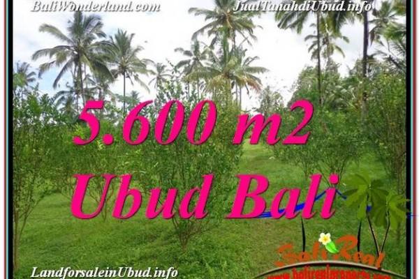 TANAH di UBUD BALI DIJUAL MURAH Untuk INVESTASI TJUB609