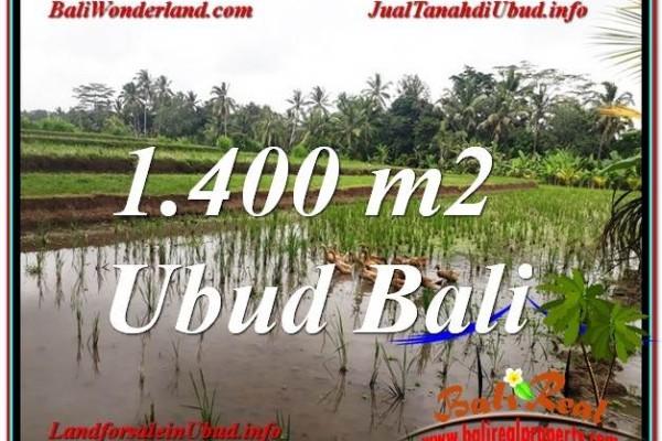 TANAH MURAH DIJUAL di UBUD BALI 14 Are di Ubud Payangan