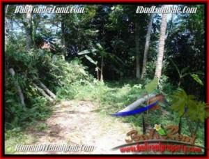 DIJUAL TANAH di UBUD 20 Are di Ubud Payangan