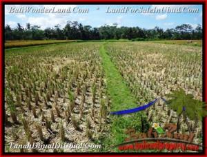 DIJUAL TANAH di UBUD BALI 2,800 m2 di Ubud Pejeng