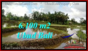 JUAL TANAH di UBUD 6,100 m2 di Ubud Pejeng