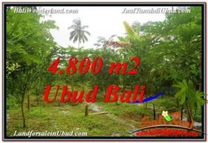 TANAH MURAH DIJUAL di UBUD BALI 48 Are di Ubud Payangan