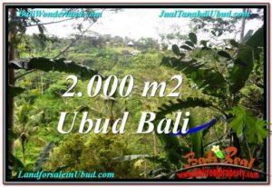 TANAH di UBUD DIJUAL MURAH 20 Are di Ubud Payangan
