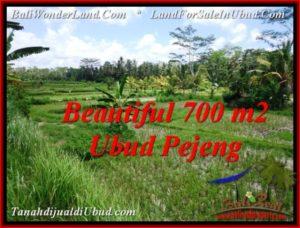 JUAL TANAH MURAH di UBUD 700 m2 di Ubud Pejeng
