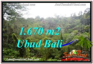 TANAH MURAH di UBUD BALI DIJUAL 1,670 m2 View Tebing
