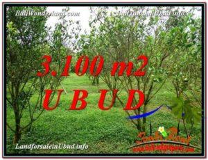 JUAL TANAH MURAH di UBUD 3,100 m2 di Ubud Tegalalang