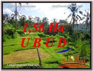 TANAH DIJUAL MURAH di UBUD 15,600 m2 di Ubud Payangan