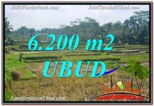 TJUB631 Jual Tanah Murah di Ubud Gianyar - Land for sale in Bali 1
