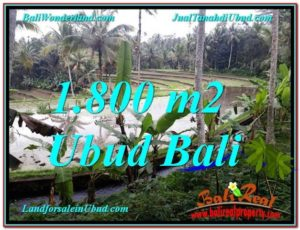 DIJUAL TANAH di UBUD BALI 18 Are di Ubud Tampak Siring