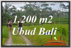 JUAL TANAH di UBUD BALI 12 Are View Sawah