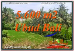 TANAH DIJUAL DI UBUD, JUAL TANAH DI UBUD, INVESTASI PROPERTI DI BALI, tanah di UBUD, dijual TANAH MURAH DI UBUD Bali, investasi property, TANAH MURAH DI BALI