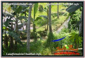 TANAH MURAH JUAL di UBUD BALI 56 Are View Sawah dan Sungai Kecil