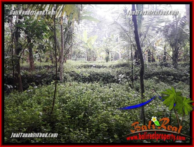 Tanah Murah di Ubud Bali Dijual 438 m2 di Ubud Pejeng