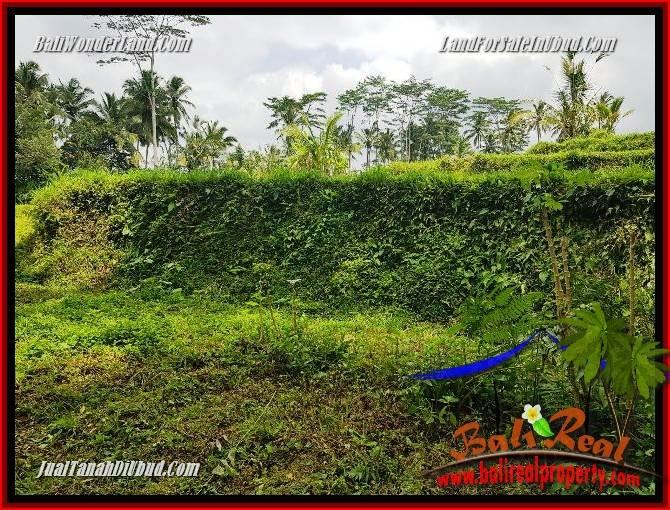 Tanah Dijual di Ubud Bali 9 Are di Ubud Tegalalang