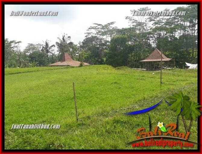 Dijual Tanah Murah di Ubud Bali 12 Are di Ubud Tegalalang