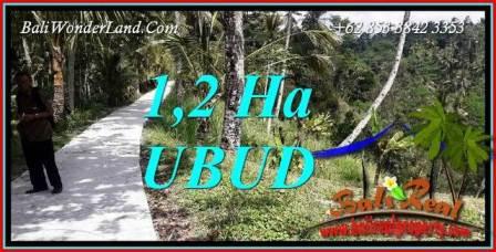Dijual Murah Tanah di Ubud Bali 120 Are di Ubud Tegalalang