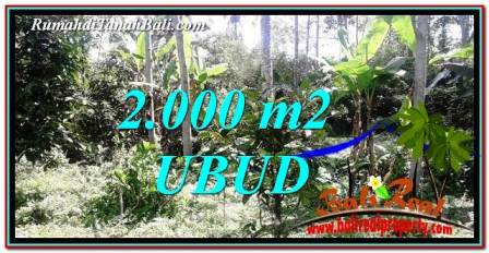 TANAH MURAH JUAL di UBUD 20 Are View kebun